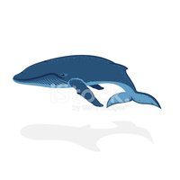 Wildlife,Vector,Whale,Large...