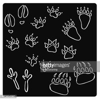 vector illustration of silhouettes animal tracks