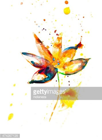 Beautiful colorful flower on white background.