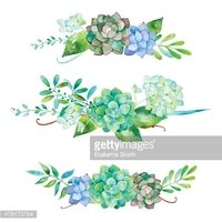 Vector flowers set. Colorful floral collection with leaves and flowers