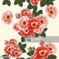 wallpaper pattern with roses