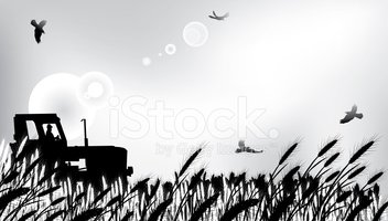 Wheat field stock vector. Illustration of gold, rural - 15855844