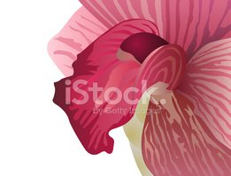 Orchid,Flower,Pink Color,Tr...