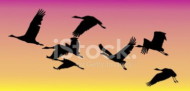 Common Crane,Bird,Flock Of ...