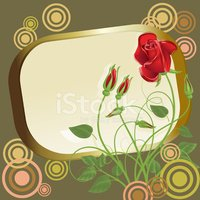 Rose - Flower,Abstract,Fram...