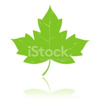 Maple Leaf,Leaf,Symbol,Gree...