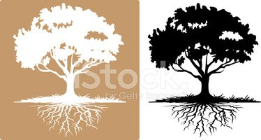 Root,Tree,Silhouette,Vector...