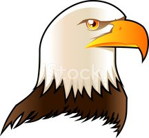 Eagle - Bird,Bald Eagle,Vec...