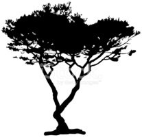 Tree,Cypress Tree,Vector,Si...