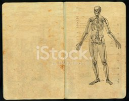 Medicine,Anatomy,Old,Book,R...