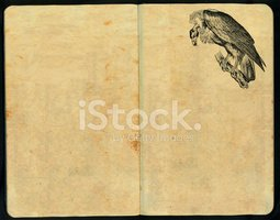 Buzzard,Book,Old,Ilustratio...