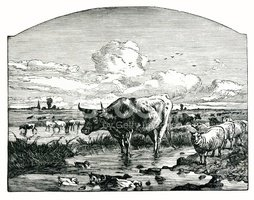 Cow,Etching,Sheep,Farm,Old,...