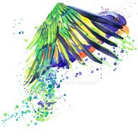 Parrot illustration with splash watercolor textured  background.