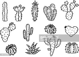 vector collection hand draw of cactus