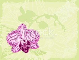 Orchid,Moth Orchid,Vector,S...