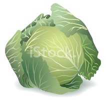 Cabbage,Vegetable,Vector,Fo...