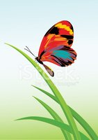 Butterfly - Insect,Grass,Il...