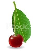 Cherry,Nature,Leaf,Fruit,Fo...
