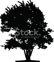 Tree,Vector,Silhouette,Tree...