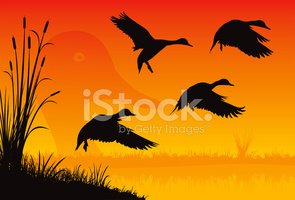 Duck,Flying,Silhouette,Bird...