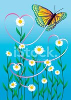 Butterfly - Insect,Daisy,He...