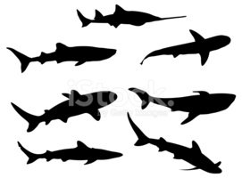 Shark,Animal,Silhouette,Fis...