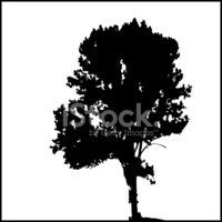 Oak Tree,Tree,Silhouette,El...