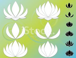 Lotus Water Lily,Water Lily...