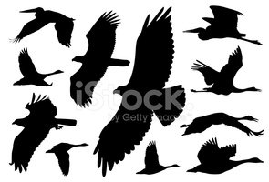 Eagle - Bird,Bird,Silhouett...