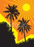 Palm Tree,Tropical Climate,...