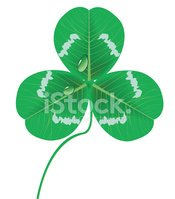 Clover leaves with waterdrop