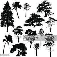 Arbre Silhouette Collection