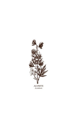 Botanical illustration of Aconite flower