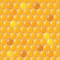 Honey. Honey honeycombs