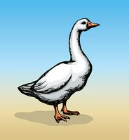 Goose. Vector drawing