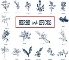 Set of Herbs and spices in sketch style.