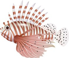 Ichthyology,Illustration,Un...