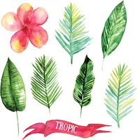 Set of tropical leaves. Hand drawn leaves illustration in watercolor