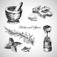 vector hand drawn herbs and spices - ginger, pepper, mint