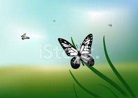 Butterfly - Insect,Painting...