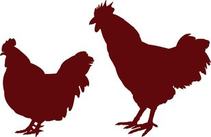 Chicken - Bird,Symbol,Sign,...