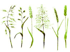 Hand drawn watercolor meadow grass types green color