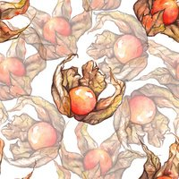 Watercolor hand drawn physalis fruit berry seamless pattern