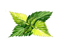 Watercolor summer insulated nettle