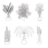 Tropical plants, Set of flat potted houseplants