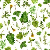 Seamless pattern with watercolor drawing herbs and leaves