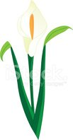 Lily,Flower,Vector,Single F...
