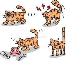 Domestic Cat,Eating,Cartoon...