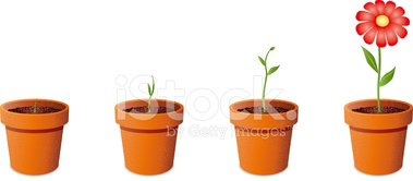 Potted Plant,Growth,Flower,...