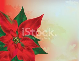Poinsettia,Christmas,Single...